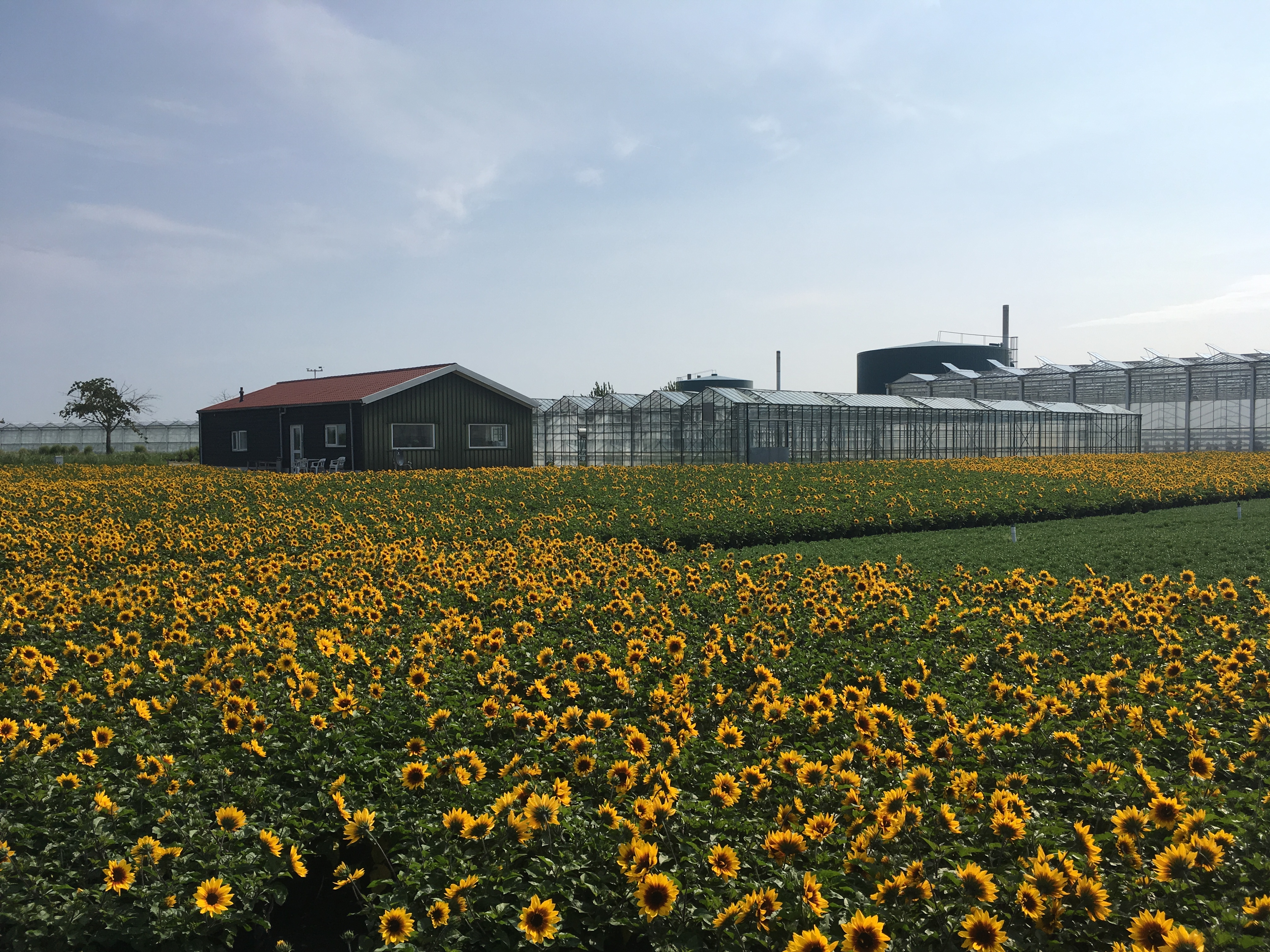 Dutch flower growers use smart sensors to prevent leaching into groundwater