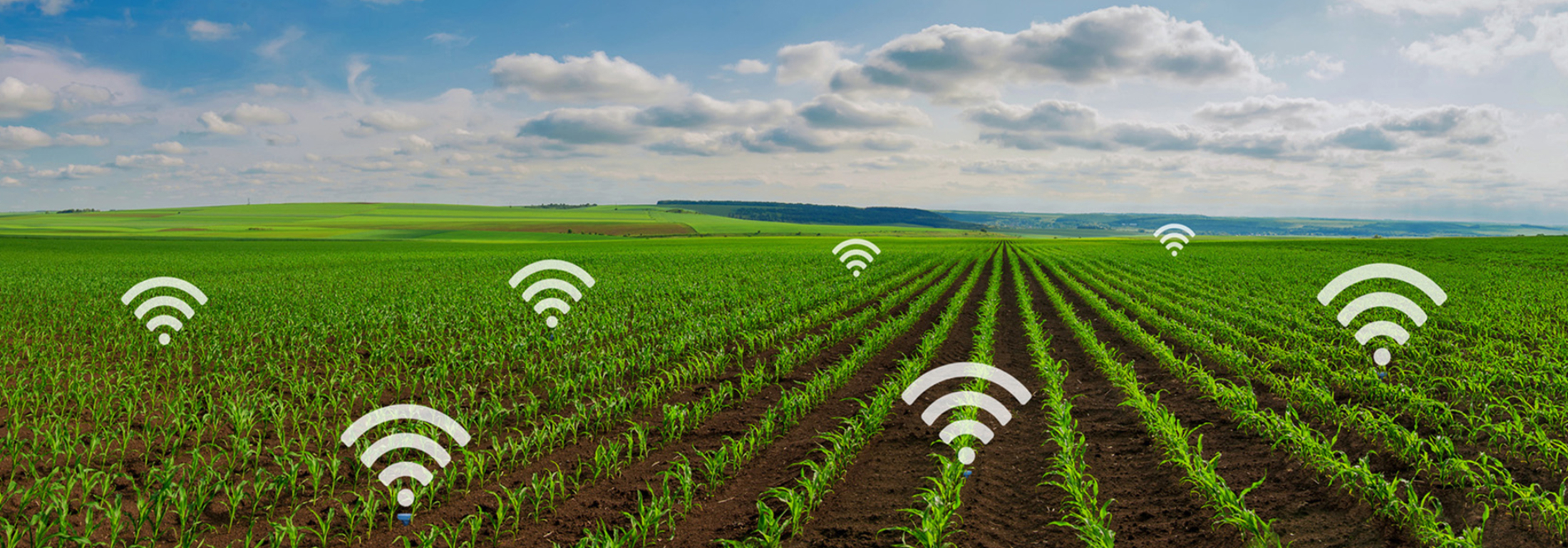 Wireless soil moisture sensors
