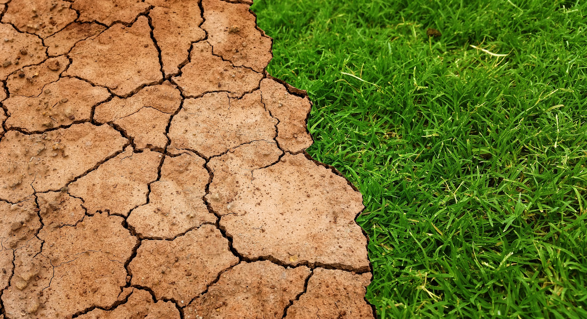Why soil becomes water repellent (hydrophobic) – and what to do about it